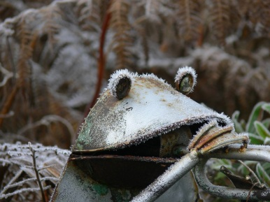 frosty frog pic