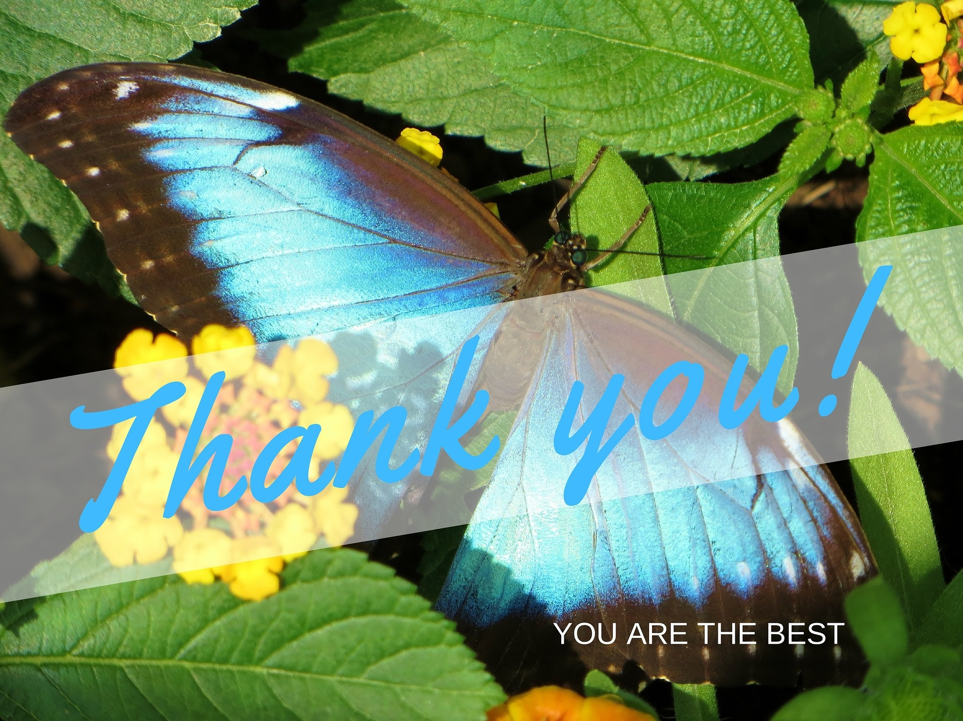 thank-you-butterfly