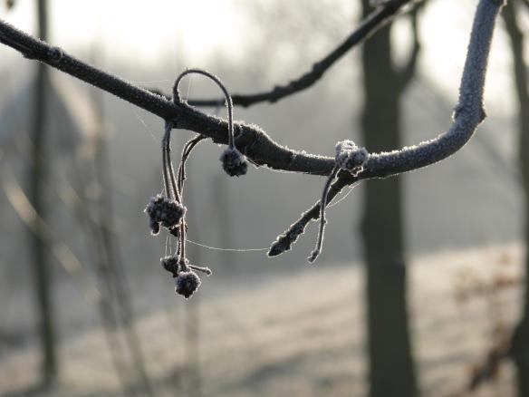 photos-jan-to-mar-2012-006